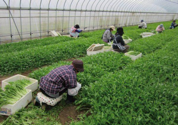 農作業改善のポイント