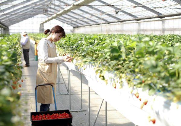 女性農業者への労働面からの配慮