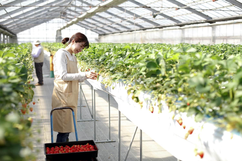 農林水産省/農林水産祭「女性の活躍」受賞事例